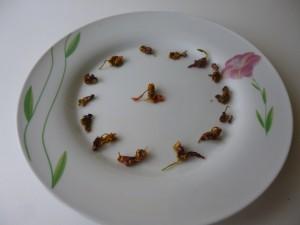 bonbons de capucines terminés P1020604