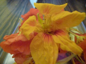 capucines fleurs P1020577