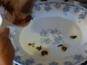 mise en plat des bonbons de capucines P1020587