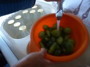 nettoyage des tomates vertes P1020410
