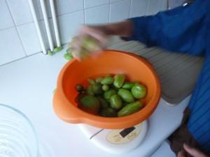 pesée des tomates vertes P1020407