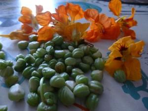 capucines graines et fleurs P1040414