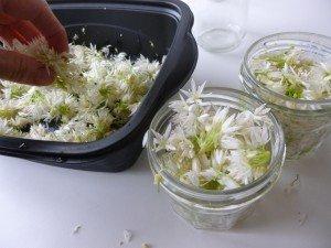 1 mis en verrines des fleurs  d'ail P1050422