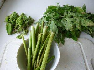 4 conservation des différentes parties de la plante pour tisane ou alimentaire P1060015